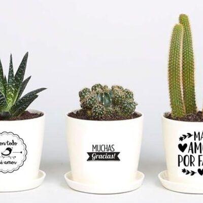 cactus o suculentas con maceta personalizada desayunos sorpresa bogota